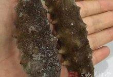海参的功效与作用 海参的治病功效